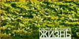 Растительная жизнь (НТВ, 03.11.2002) Мария Миронова